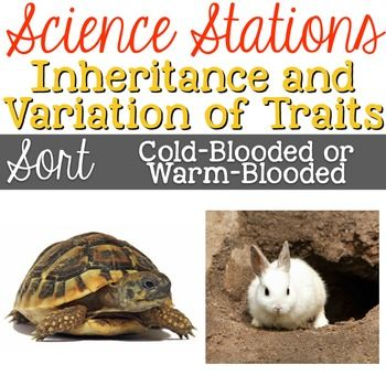 Difference Between Cold Blooded and Warm Blooded Animals
