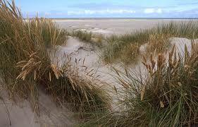 Kennemerduinen dunes. Just west of Haarlem, #Nederlands #Holland #Netherlands