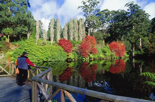 National Rhododendron Gardens in spring :: Dandenong Ranges, Victoria, Australia