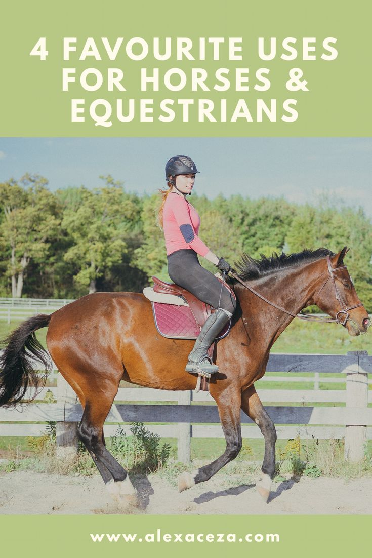 Hey Lovelies! This post is mainly for all my equestrians out there. If any of you guys know, when you walk into a tack store and see all the different products