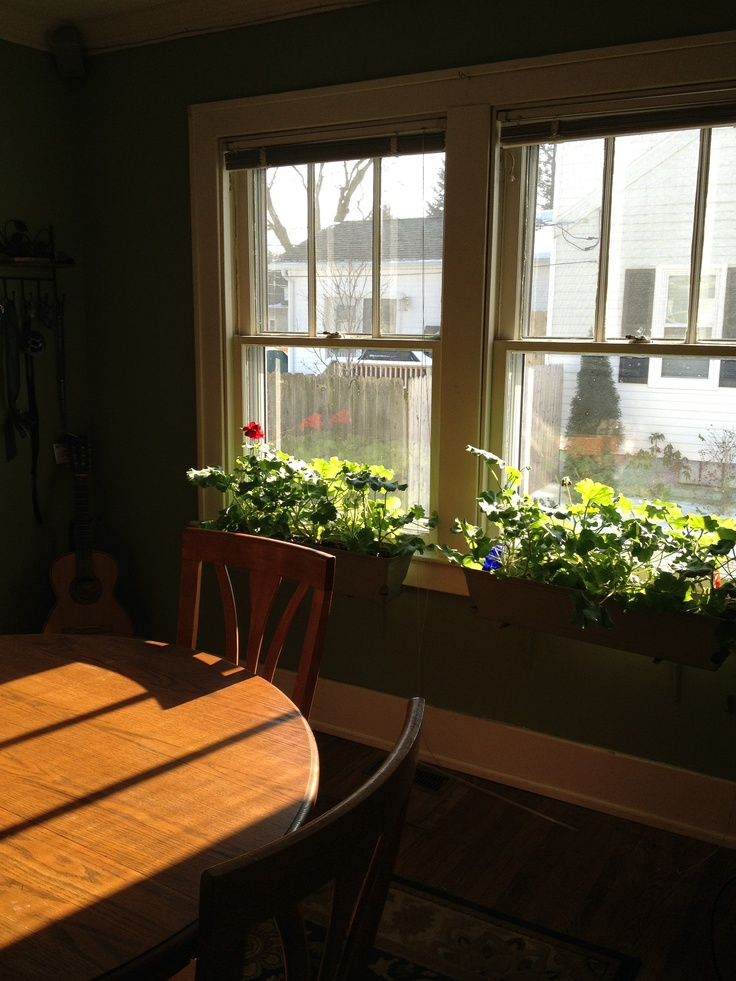 Indoor window boxes bloom year round and warm the winter grays