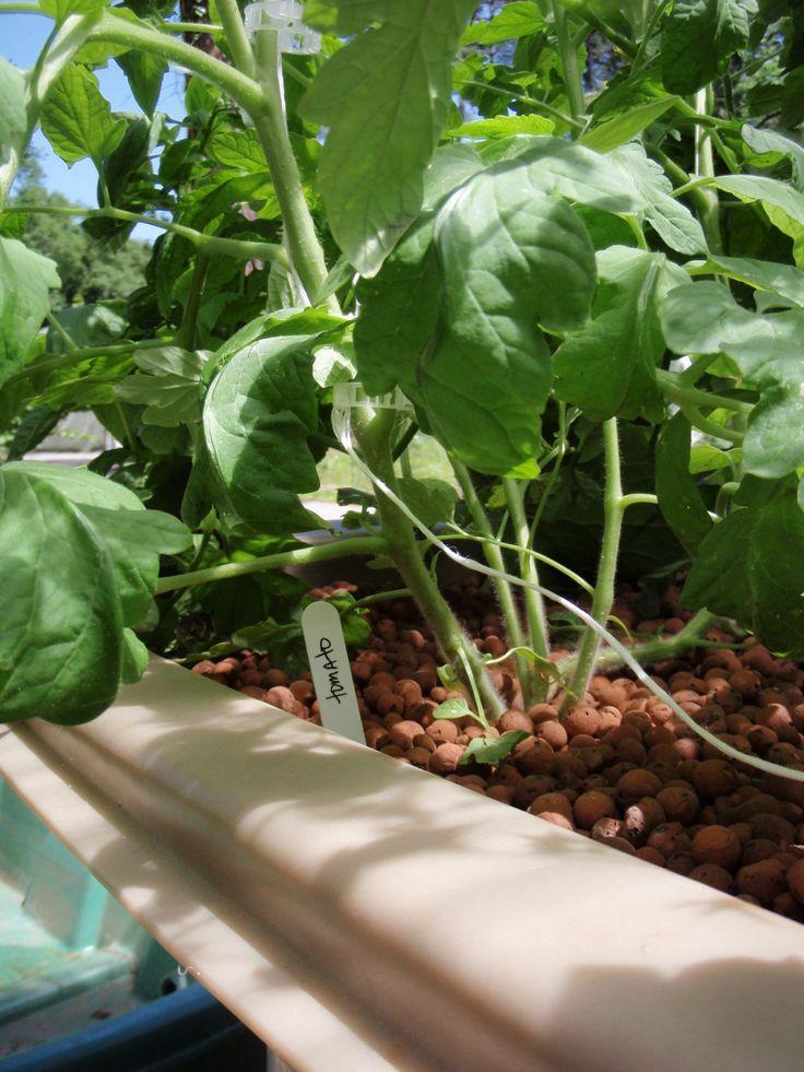 Closeup Of Greenlife Aquaponics Patio Garden