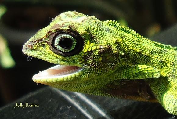 K Dragon Lizard 17 Best images ...