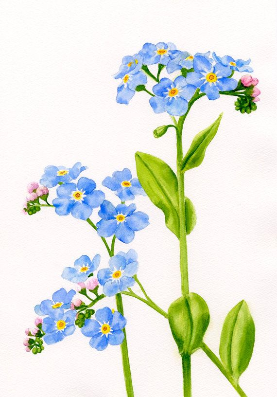 Forget Me Not flowers watercolor painting original by ssfreemanart