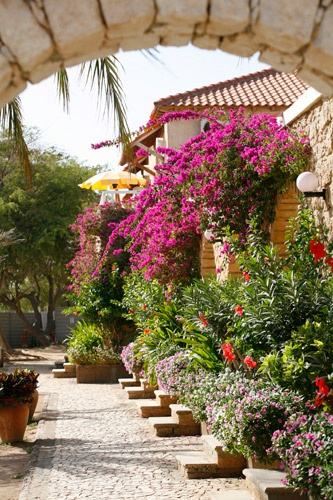 Hotel Morabeza, Cape Verde  ~lover, brother, bougainvillea, my vine twists around your mane..~ tori amos