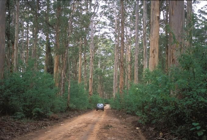 Boranup Drive - Leeuwin Naturaliste, Tourism Western Australia