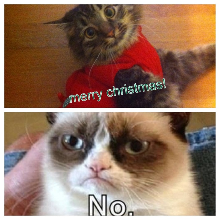 Funny Cat Videos At Christmas