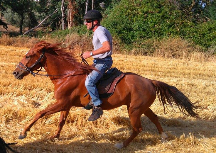 the gorgeous Picasso, cantering on a stubble field