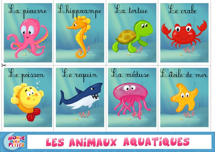 les animaux aquatiques bricolage pinterest animaux. Black Bedroom Furniture Sets. Home Design Ideas