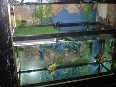 Acuario para tortugas de agua | Aprender a cuidar animales y mascotas