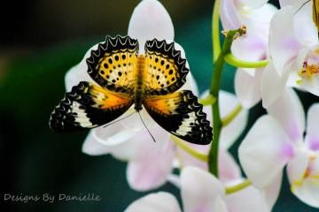 Butterfly On Pink Orchids, 11x14 High Quality Photography, Large Wall Art by caughtoncamera for $38.99 #zibbet #butterfly | See more about pink orchids, photography wall and orchids.