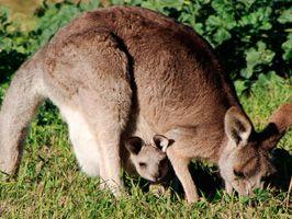 Hunter Big 4 Valley Vineyard tourist accommodation cessnock nsw australia