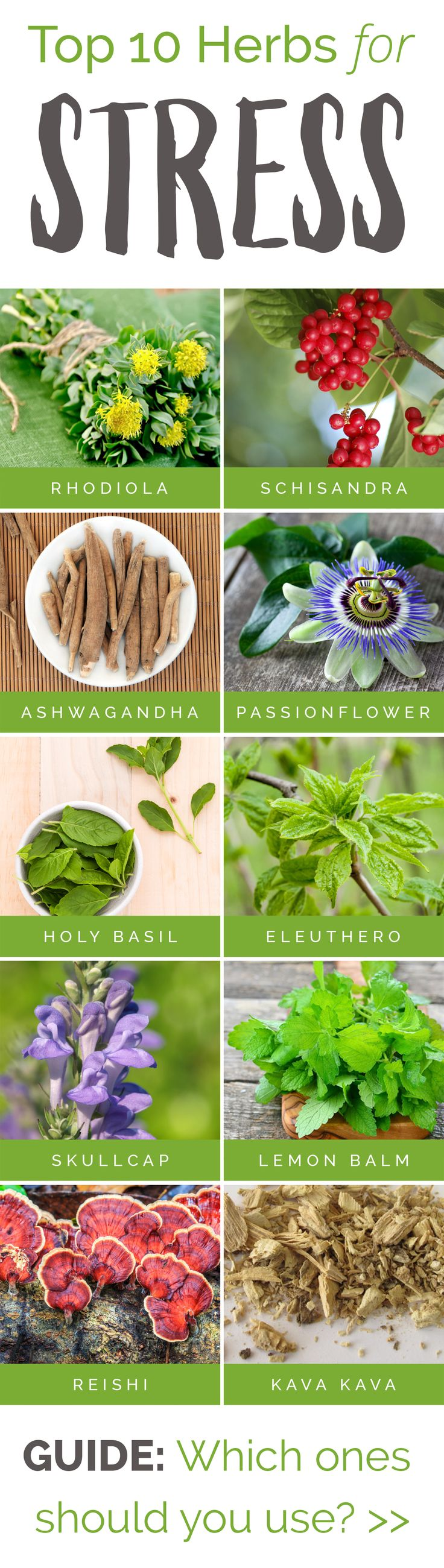 The Top 10 Herbs for STRESS... which ones should you use? http://blog.stresscompany.com/top-10-herbs-for-natural-stress-relief/