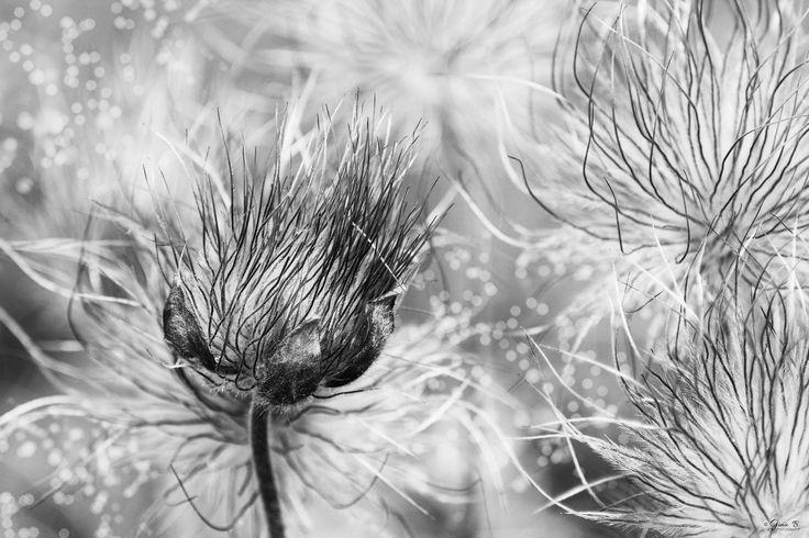 """ph. © Gi Na """" Spring Fairy Tale"""""""