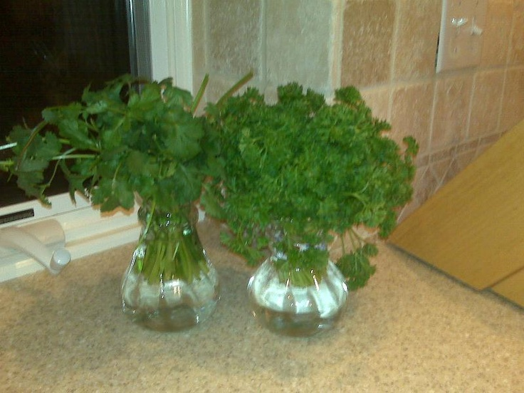 Camille Vases used to keep herbs fresh! www.amberupton.willowhouse.com