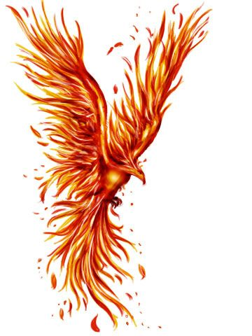 phoenix tattoo - Google претрага
