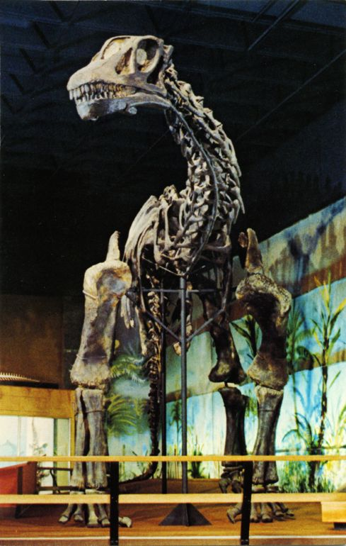 181 best images about dinosaur postcards on pinterest Dinosaur museum ohio