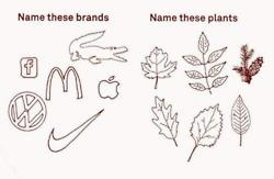 wow: Logos, Birches, Life, The Faces, Names, Plants, Funny, Now, People