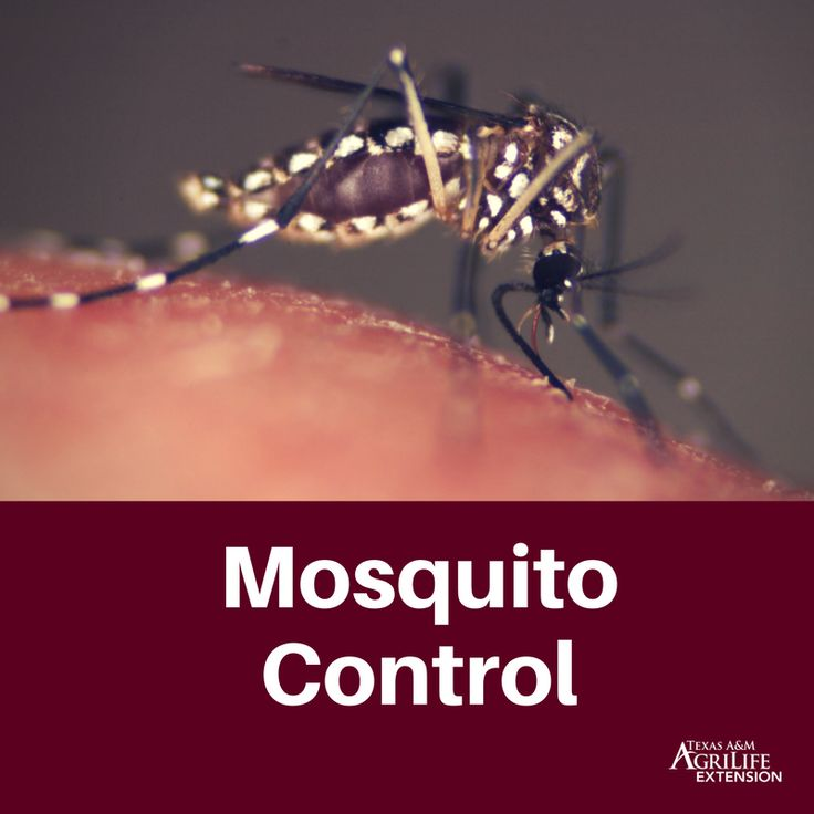 After a severe storm, mosquito populations can explode, and the diseases they carry can be a danger to humans. Mosquito problems occur in two distinct waves after a flood. The first to arrive are the flood water mosquitoes, which include the salt marsh (Aedes taeniorhynchus, Aedes sollicitans) and p
