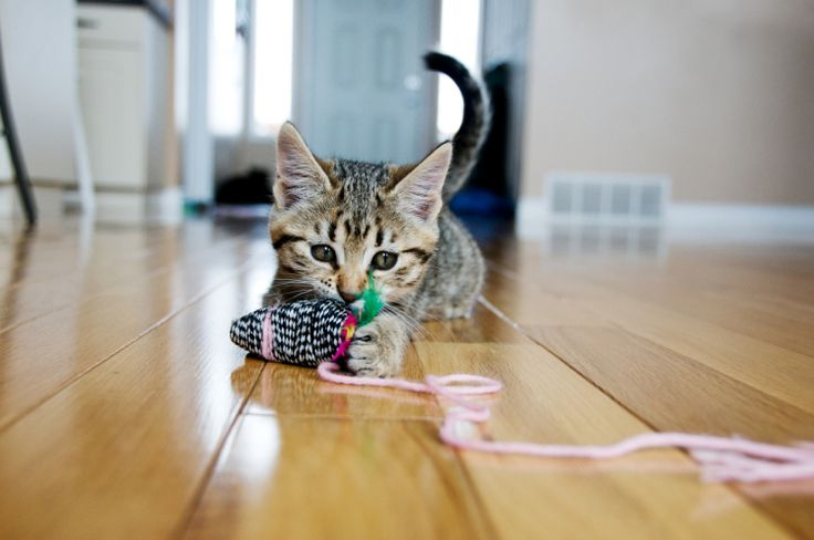 What is catnip and why do cats love it?