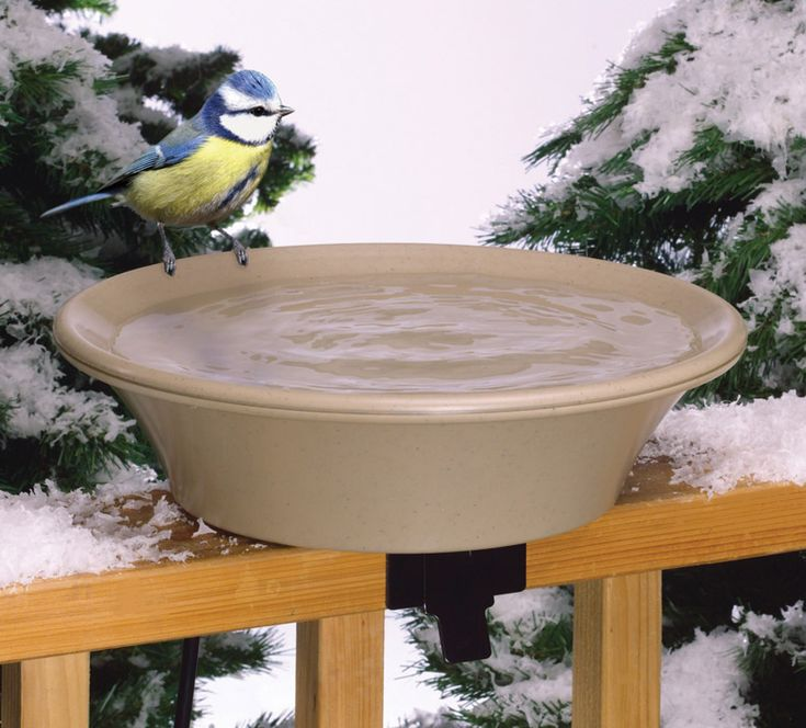 Heated Bird Bath provides important drinking water source during the winter.