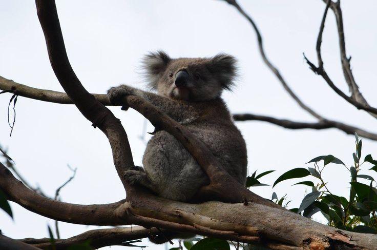 Australien. Australia. Nature. Travling. Travel. Memories. Adventuredk. Animals. tree