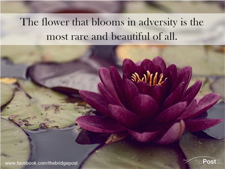 60 best lotus flowers images on pinterest lotus blossoms lotus the flower that blooms in adversity is the most rare and beautiful of all mightylinksfo