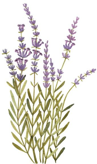 painting of lavender {Geninne's Art blog}