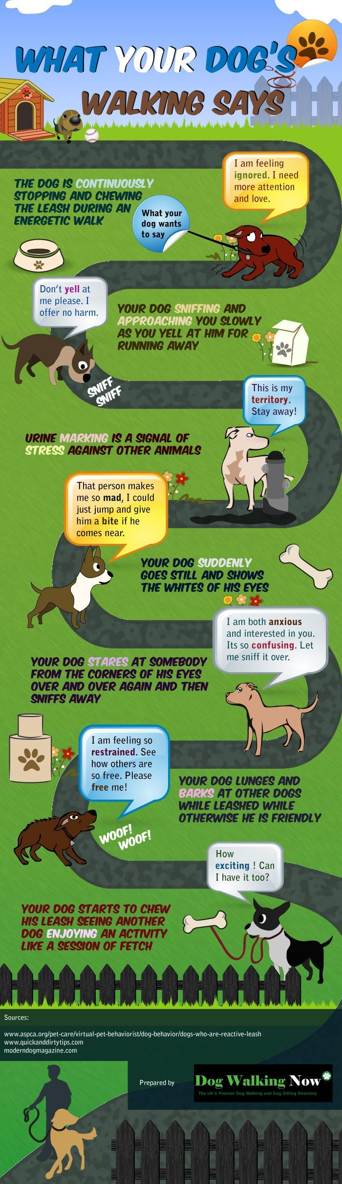 Interesting #infographic that digs deep into the psychology of showing what your dog wants to communicate while walking it