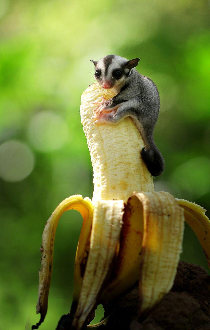 Small Animal Reptiles And Amphibian Habitats: 166 Best Glideys Images On Pinterest