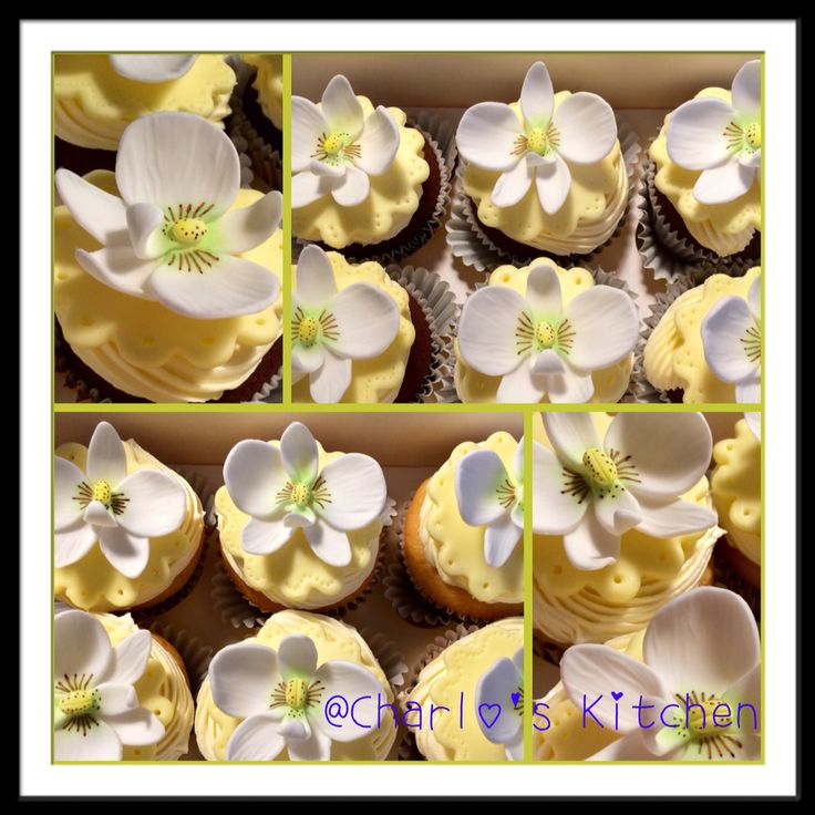 Orchid's Cupcakes