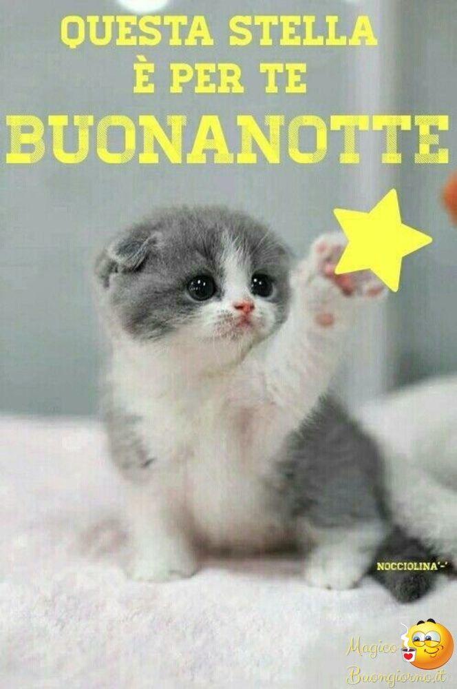 Bellissime Immagini per Augurare Buonanotte su Facebook e Whatsapp da  immagini-buonanotte.it | Foto divertenti di gatti, Immagini di gatti  divertenti, Buonanotte