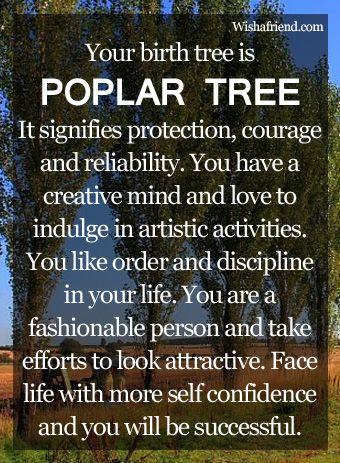 Birth Tree: Poplar Tree_for May born Babies
