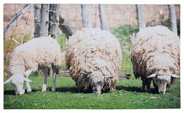 Printed Doormat - Sheep - modern - Doormats - Parpadi