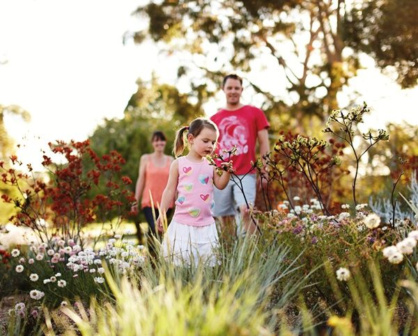 Kings Park in #Perth is one of the best places to see #wildflowers