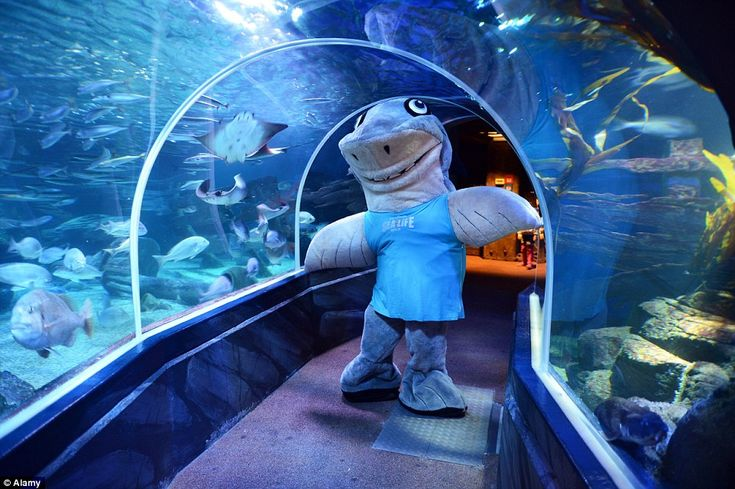 A shark mascot stands in the AquaDom and Sea Life Berlin. The centre aims to give a home t...