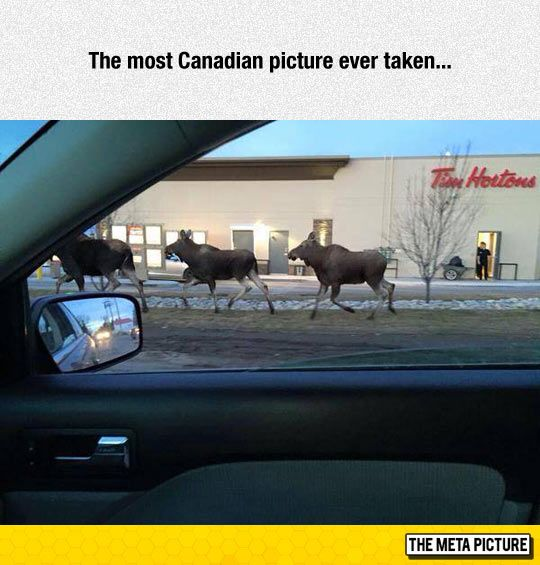 It Doesn't Get Any More Canadian Than This More