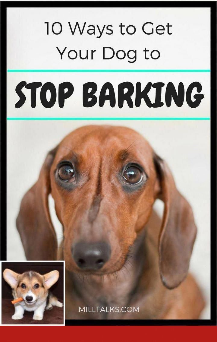 Finest Dog Training Tricks Website Here Dog Training School Dog