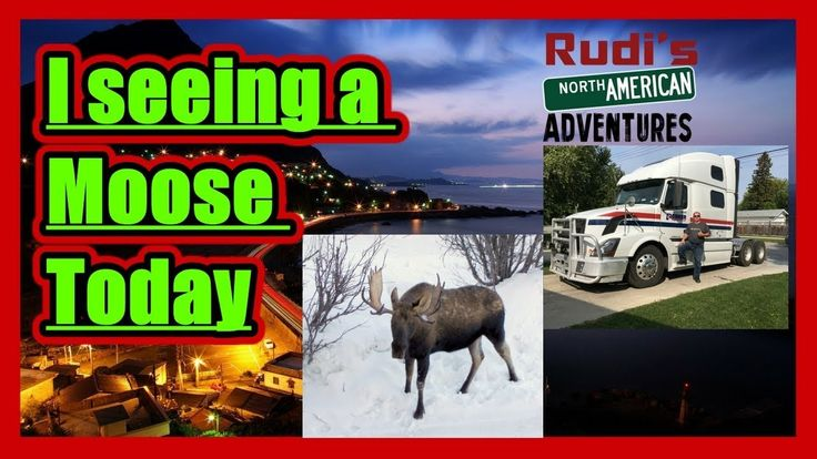 I seeing a Moose Today Rudi's NORTH AMERICAN ADVENTURES 12/10/17 Vlog#1278 - YouTube