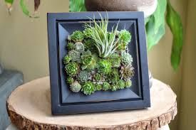 succulents vertical - Google 검색