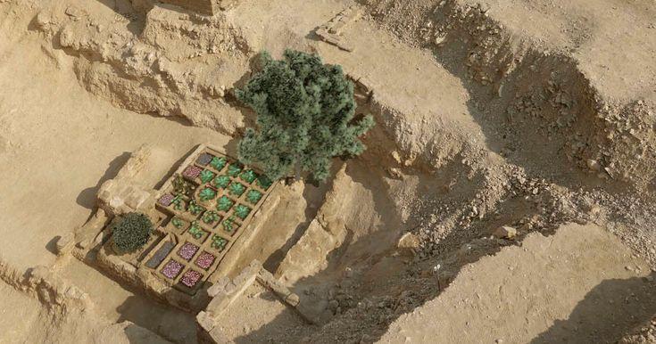 Le Projet Djehouti en Egypte vient de mettre au jour le premier jardin funéraire jamais découvert. Cette découverte est majeure puisqu'elle daterait de l'époque où la ville de Thèbes, aujourd'huiappelée Louxor, est devenue l...