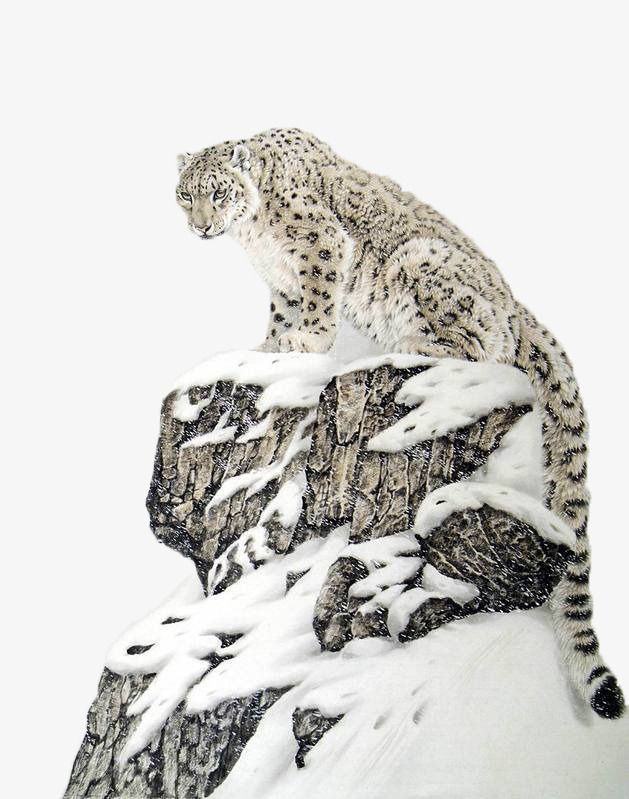 Alpine Snowflakes On The Snow Leopard Paintings Png And Clipart Animals Wild Snow Leopard Animals Beautiful