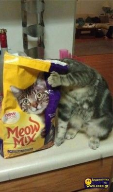 Γάτες σε απίθανες και αστείες φωτογραφίες της κατάλληλης στιγμής (7)