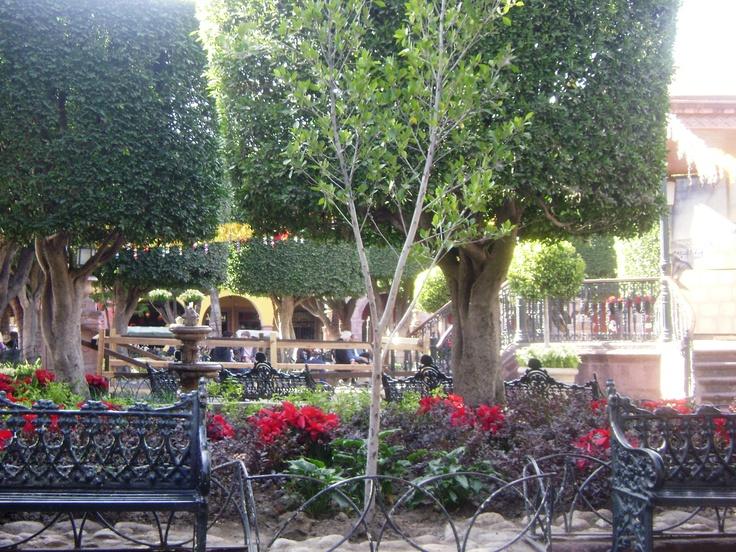 El jardin san miguel de allende dec 2012 ssa san for Jardin san miguel de allende