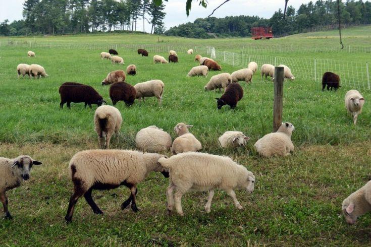 Shelburne Farms in Shelburne, Vermont