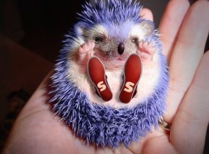 42 best Hedgehogs Are Pretty Awesome images on Pinterest ...
