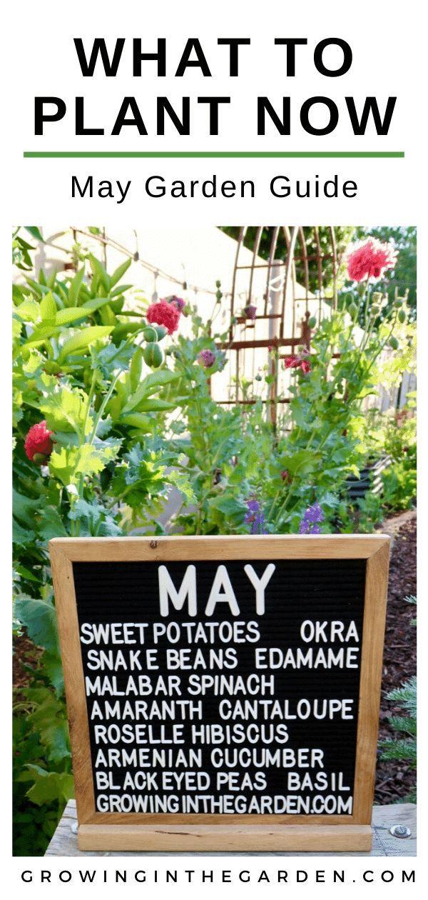 60e822a7ffff243b21427a6230050583 - Gardening In Arizona When To Plant