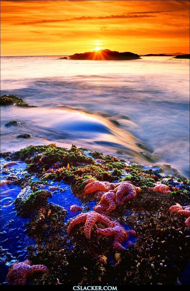 Pacific Rim National Park, Vancouver Island, British Columbia