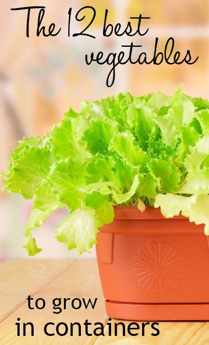 The 12 best vegetable crops to grow in containers