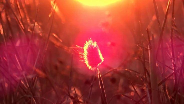 David Levy - Afterlife